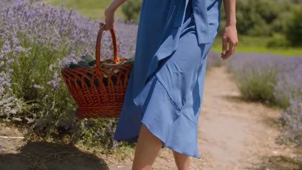 Thumbnail for Female with Picnic Basket Walks in Lavender Field