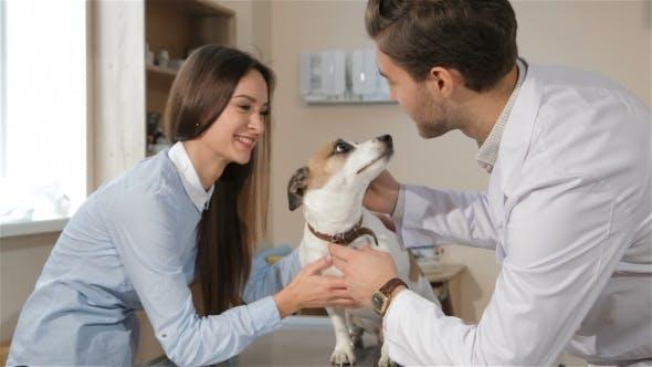 Thumbnail for Male Veterinarian Checks Up Dog's Teeth