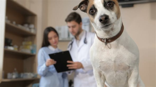 Thumbnail for Dog Sits on the Vet Table