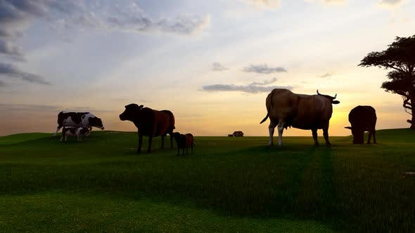 Thumbnail for Cattle Grazing at Sunset