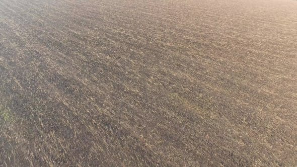 Thumbnail for Plowed Fertile Field with a Small Amount of Hay