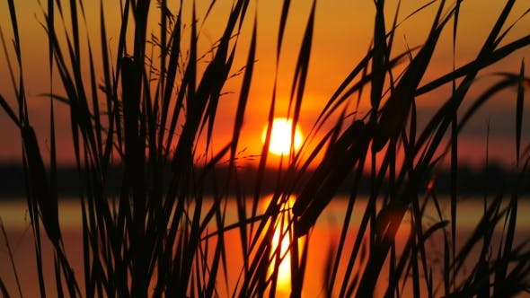 Thumbnail for The Reeds on Sunset Landscape With Sun and Water Background