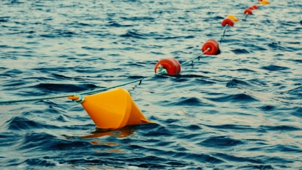 Thumbnail for Colored Buoys Floating in a Seaport