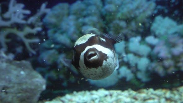 Thumbnail for Beautiful Exotic Fish in the Oceanarium