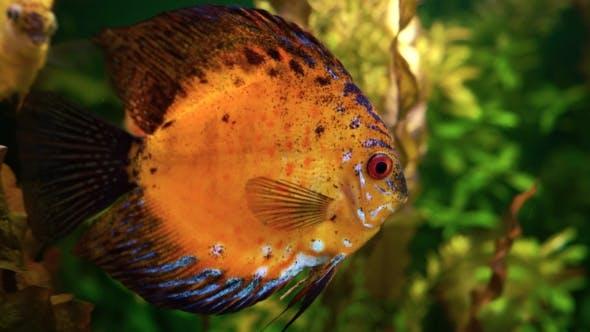 Thumbnail for Bunte Korallenfische im Ozeanarium