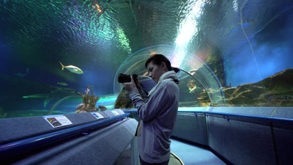 Cover Image for Woman Taking Pictures of Coral Fish in Oceanarium