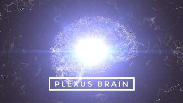 Thumbnail for Plexus Brain Rotation #1