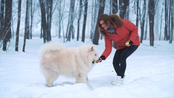 Thumbnail for Happy Young Woman Playing with White Samoyed Dog on