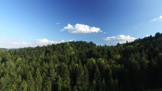 Thumbnail for Flying Over the Pine Forest on a Hilltop. Aerial View