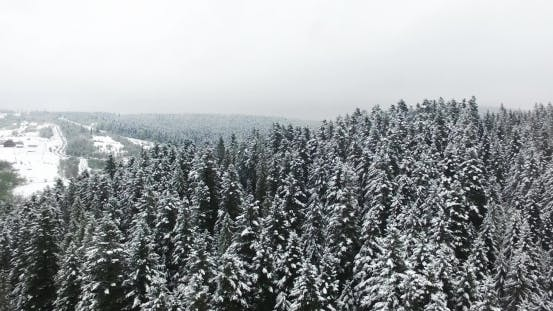 Thumbnail for Aerial View. Winter Forest in Mountains