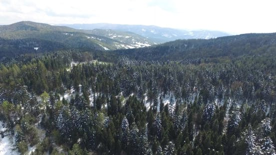 Thumbnail for Tall Pine Trees on a Hilltop Covered with Snow