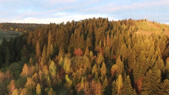 Thumbnail for Sunset Over the Forest. Aerial View