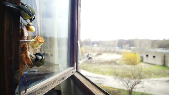 Thumbnail for Bird Titmouse Eats Bread and Lard on a Wooden Window Sill.