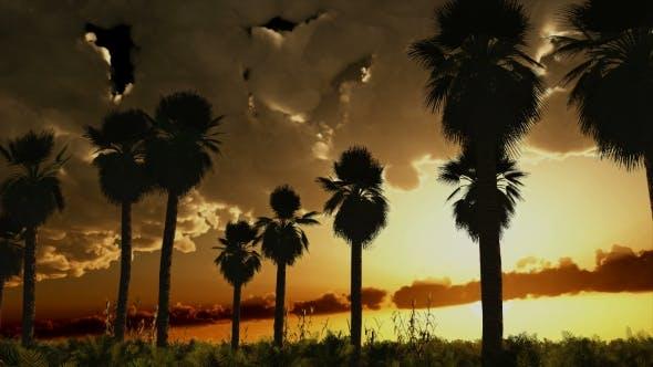 Thumbnail for Palms in Desert at Sunset