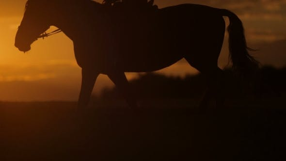 Thumbnail for Woman Riding Horse on Field During Sunset