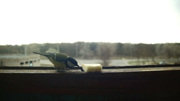 Cover Image for Bird Titmouse Eats Bread on a Wooden Window Sill