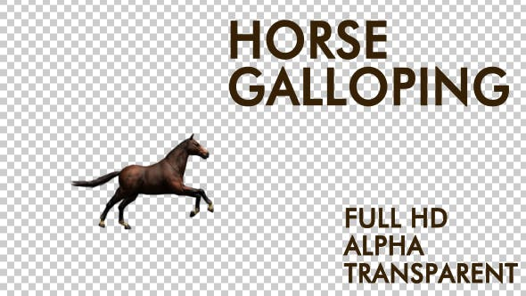 Thumbnail for Horse Galloping
