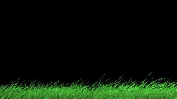 Thumbnail for Grass1