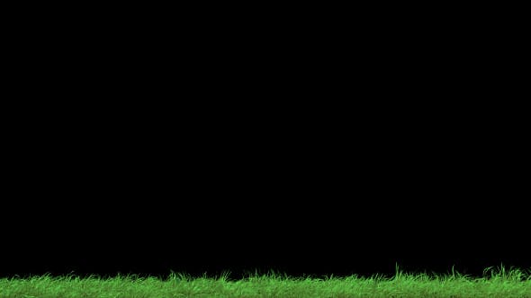Thumbnail for Grass2