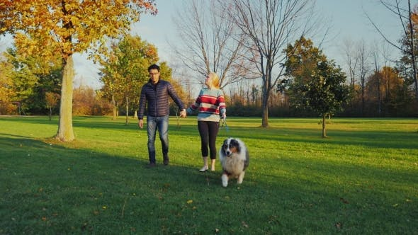 Cover Image for Multiethnic Couple Walking with a Dog in the Autumn Park