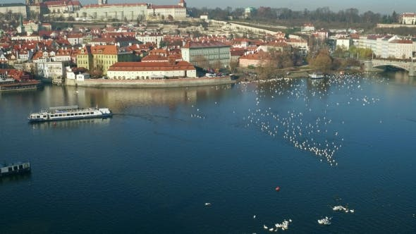 Thumbnail for Vltava River White Swans and Distant Tourist Boat in Prague on a Sunny Day