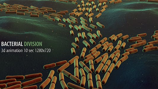 Thumbnail for Bacterial Division