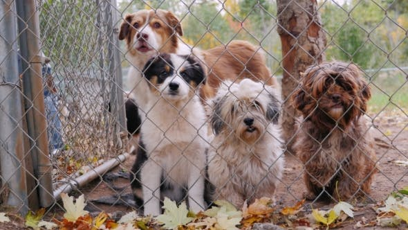 Thumbnail for Cute Puppies of Different Breeds of Dogs in the Kennel. Waiting for Its Owner