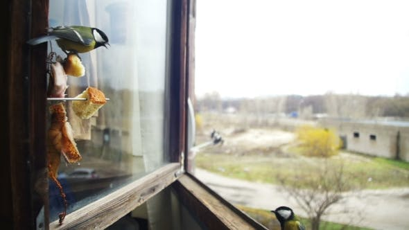 Thumbnail for Bird Titmouse Eats Bread and Lard on a Wooden Window Sill