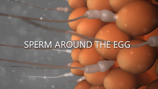 Thumbnail for Sperm Around The Egg