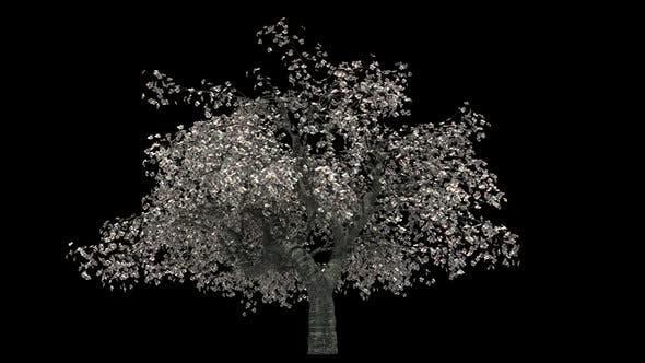 Thumbnail for Cherry Tree Loop
