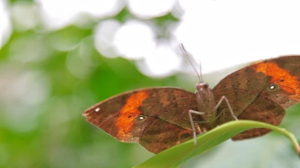Butterfly Having a Rest on a Leaf. Natural Background with  Photo of Insect.