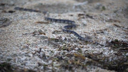Snake Crawling on the Ground