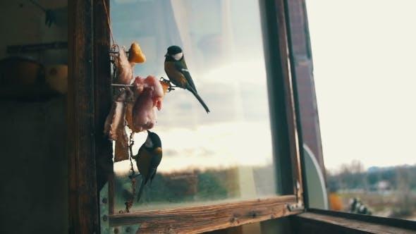 La  mésange d'oiseau mange du pain et du saindoux sur un rebord de fenêtre en bois.