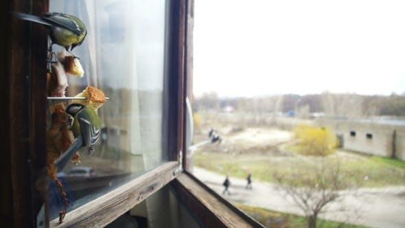 Thumbnail for Bird Titmouse Eats Bread and Lard on a Wooden Window Sill