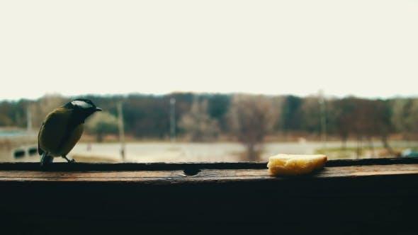Thumbnail for Bird Titmouse Eats Bread on a Wooden Window Sill