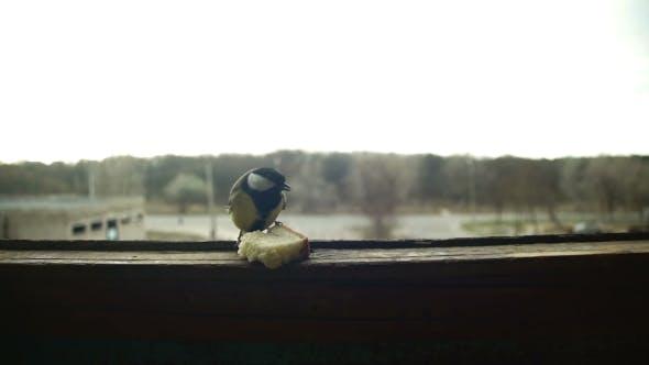 Thumbnail for Bird Titmouse Eats Bread on a Wooden Window Sill.