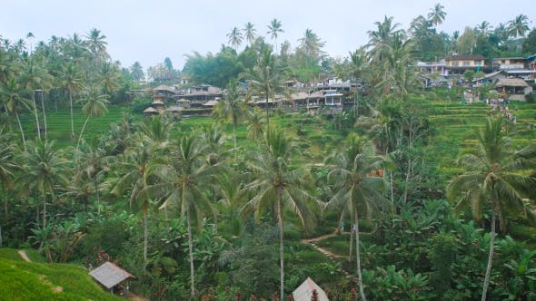 Thumbnail for Village Is Built on a Green Hill in the Jungle. Many Small and Low Houses Are Next To Each Other