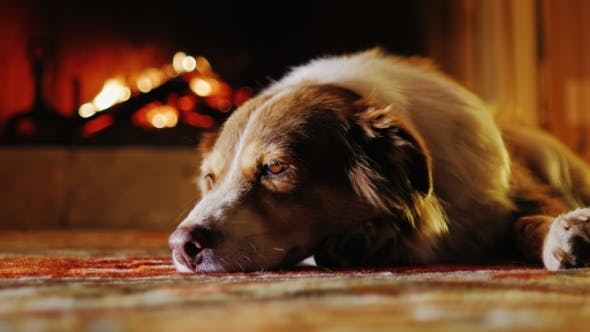 Thumbnail for Cute Dog Dozing in a Cozy House Near the Fireplace
