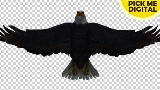 Thumbnail for Eagle 04