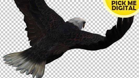 Thumbnail for Eagle 05