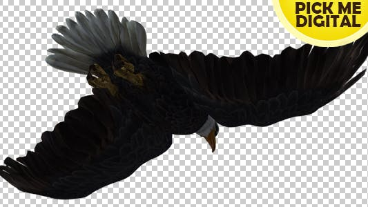 Thumbnail for Eagle 08