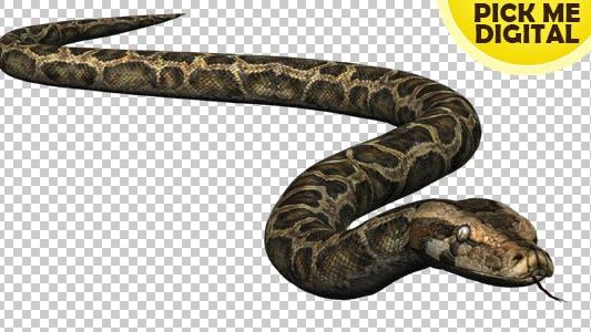 Thumbnail for Python 02
