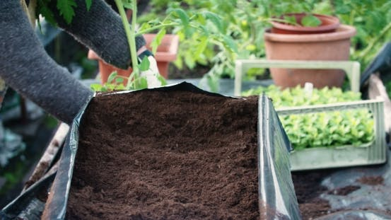 Thumbnail for Transplanting House Plants in a Plastic Pot