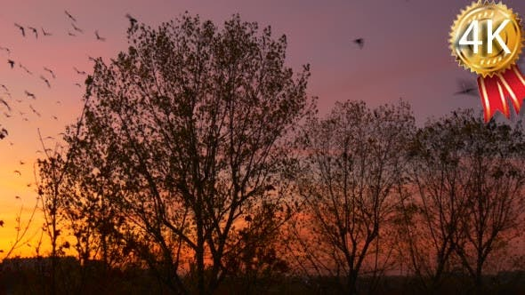 Cover Image for Birds Silhouettes Fly up From Tree Bushes