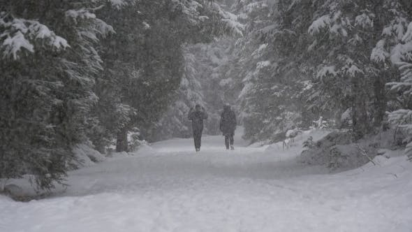 People Walk in Snowfall in the Forest