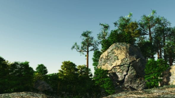 Cover Image for Pine Forest on Granite Rock