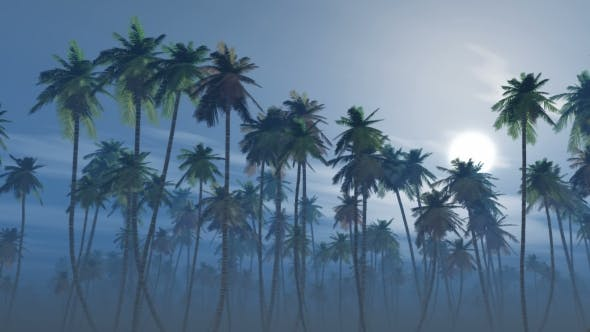 Cover Image for Mysterious Foggy Palm Forest