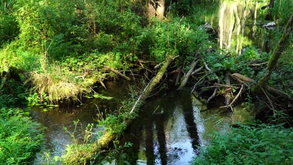 Thumbnail for Forest Stream Among the Green Plants, Beaver Dam, Clear Water