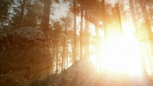 Sunrays Shining Through the Trees