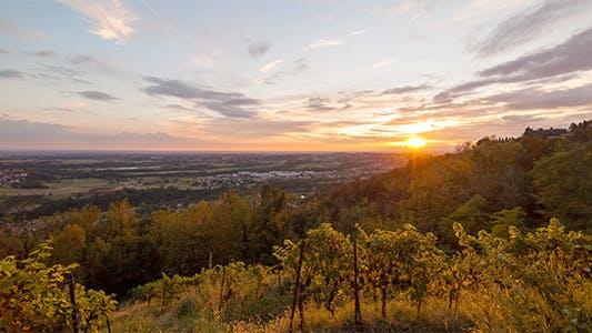 Thumbnail for Vineyard Sunset